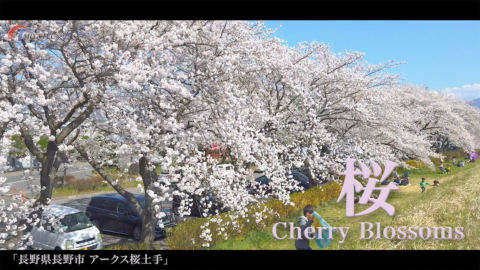 4K)憩いの桜土手〜長野県長野市〜