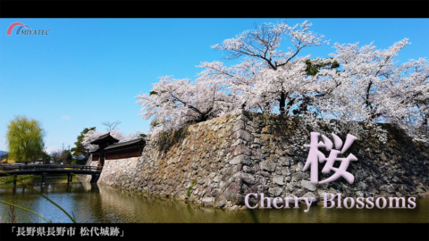 4K)桜咲く松代城〜長野県長野市松代町〜
