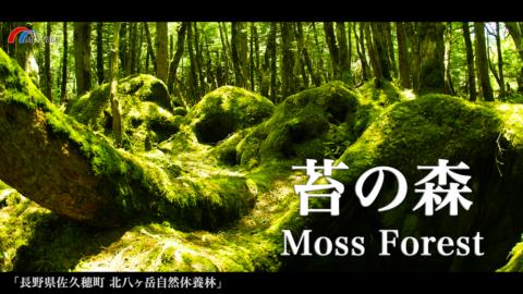 4K)神秘的な「苔の森」〜長野県佐久穂町〜