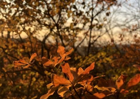長野県佐久市と群馬県下仁田町の境にある荒船山へロケに行ってきました