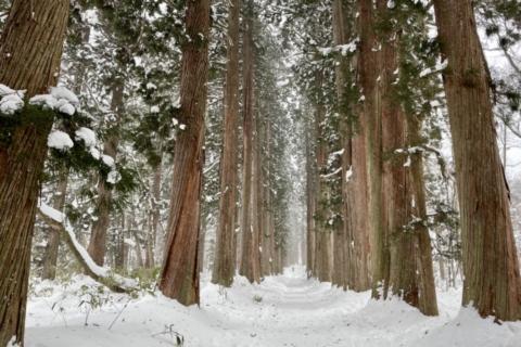 冬の長野市戸隠_PV撮影_4K・ドローン