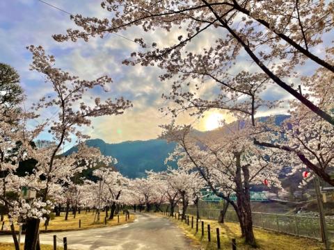天龍村に春が来た!🌸