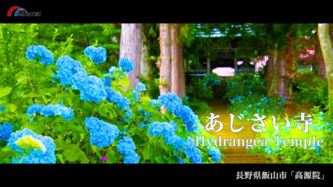4K)1万本のあじさいが咲く寺「高源院」〜長野県飯山市〜