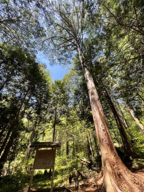 上松町(赤沢自然休養林)を撮影しました